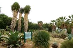 Plantas de California